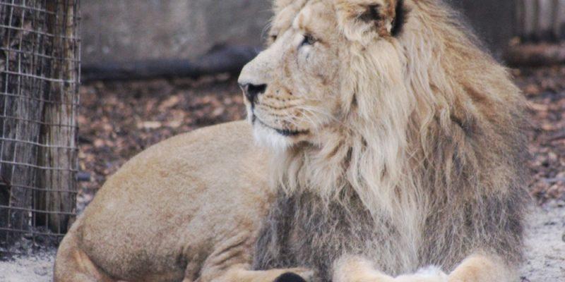 dierentuin blijdorp oermensjes eropuitjes